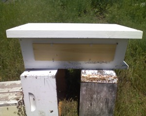 Golden Mean Top Bar Hive